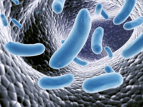Probiotics for Crohn's and Ulcerative Colitis